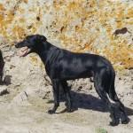 I proprietari di cani invitati a rispettare i loro obblighi