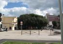 La pineta accanto alla Stazione di Senigallia verrà abbattuta: al suo posto un nuovo parcheggio