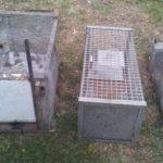 Sequestrate a Senigallia trappole per la fauna selvatica