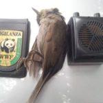 A Senigallia nuova operazione anti-bracconaggio di Legambiente e Wwf