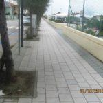 SENIGALLIA / I cani sporcano la città, ma i loro padroni non puliscono