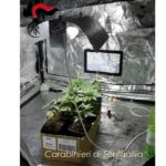 TRECASTELLI / Coltivava marijuana nel garage di casa, arrestata