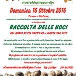 Domenica a Monte San Vito raccolta delle noci nel bosco di via Coppo