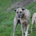 Intensificati a Senigallia dalla Polizia locale i controlli nei confronti dei proprietari dei cani