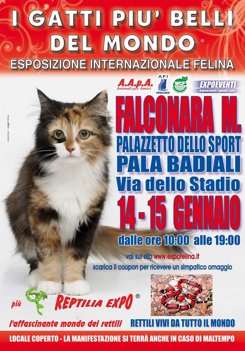 FALCONARA / In mostra al PalaBadiali i gatti più belli del mondo