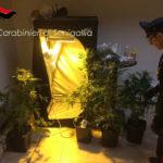 SENIGALLIA / Coltivava marijuana in casa, trentanovenne arrestato dai carabinieri