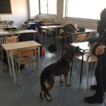SENIGALLIA / Continua la campagna scuole sicure