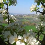 Una sfida per le Marche: seminare e far fiorire le eccellenze per la rinascita del territorio