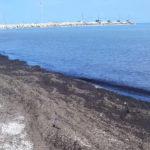 Il mare continua a scaricare detriti sulla spiaggia di Senigallia