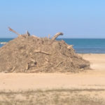 Emergenza spiaggiamenti, a Senigallia l'opposizione fa il suo mestiere