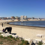 Spiagge e fondali puliti, giovedì tante iniziative in programma a Senigallia