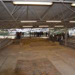 Nel Parco archeologico di Suasa riaperta la Domus dei Coiedii
