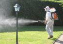 SENIGALLIA / Allarme zanzare, il Comune corre ai ripari: la prossima settimana interventi di disinfestazione in tutta la città