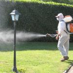 A Senigallia ci sono troppe zanzare e pappataci, la prossima settimana nuovo intervento di disinfestazione