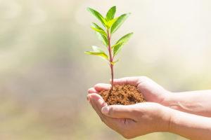 SERRA DE' CONTI / Gli stage di manutenzione ambientale segnalati tra le buone pratiche