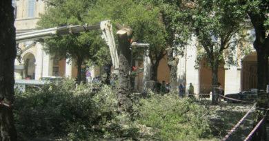 """Senigallia e gli alberi abbattuti (o da abbattere), Badioli: """"E pensare che una volta i Verdi si attaccavano ai rami pur di non farli capitozzare"""""""