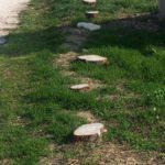 """SENIGALLIA / Tagliati tanti alberi anche alle Saline, lungo il """"chilometro in salute"""""""