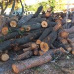 Gestione del verde a Senigallia, dopo i tagli l'Amministrazione comunale promette più confronto con le associazioni