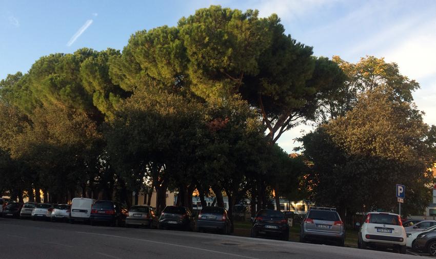 """Senigallia Bene Comune denuncia """"il Piano di distruzione del Verde"""""""