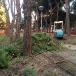 Al posto dei pini un nuovo mini-parcheggio al servizio del centro di Senigallia