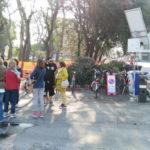 A Senigallia continua il taglio degli alberi nel silenzio totale del Partito democratico