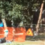 """Nella """"pinetina"""" di Senigallia anticipato dall'Amministrazione comunale il taglio degli alberi"""