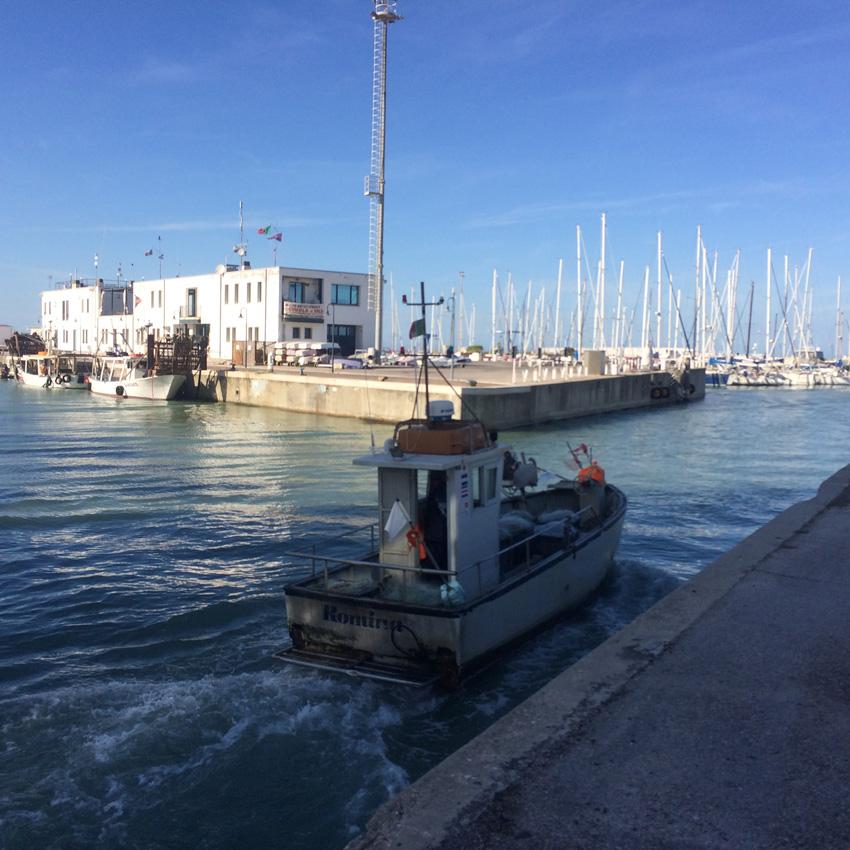 Nelle foto: pescherecci nel porto di Senigallia