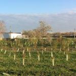 I boschi urbani di Cesanella e Saline saranno illustrati dal sindaco di Senigallia Maurizio Mangialardi al World Forum on Urban Forest di Mantova