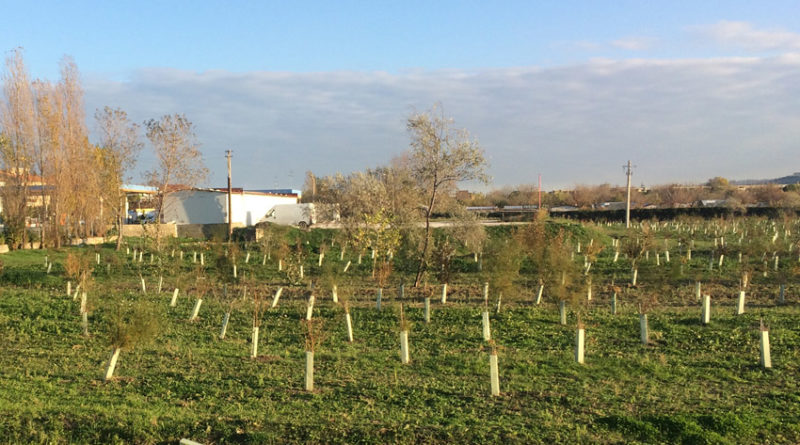 """""""Facciamo chiarezza sui boschi urbani di Senigallia: è un atto dovuto della Società Autostrade"""""""