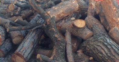 """Claudio Orazi: """"Gli alberi non sono pezzi di legno"""""""