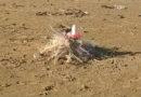 La spiaggia tra Cesanella e Cesano invasa dai retini di plastica