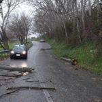 Un grosso ramo, spezzato dalle raffiche di vento cade sul cofano di un'auto tra Ostra e Sant'Angelo, illeso il conducente