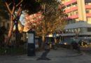 """A Senigallia manca una gestione trasparente del patrimonio arboreo"""