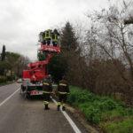 Frane e alberi pericolanti: numerosi gli interventi lungo le strade della provincia di Pesaro Urbino