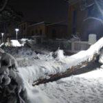 """""""Qualcuno deve spiegare perché sono caduti due pini in via Don Minzoni, a Senigallia"""""""
