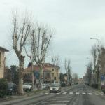 La sicurezza dei cittadini prima di tutto: a Fano deciso l'abbattimento di 3 platani in viale Gramsci