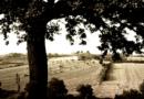 """Le Marche giardino d'Italia, incontro a Senigallia sulle suggestioni dal """"Viaggio"""" nella nostra regione di Guido Piovene"""