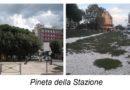 """""""Boschi urbani ma città senza alberi, il paradosso di Senigallia presentato al forum di Mantova"""""""